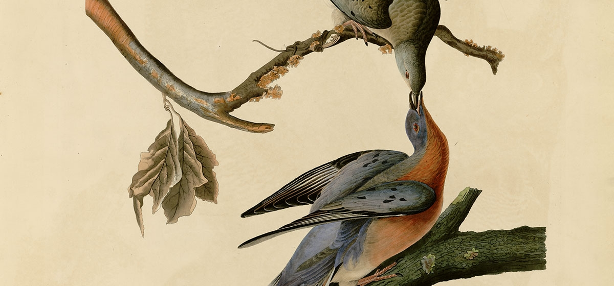 Final flight: Lessons of the Passenger Pigeon