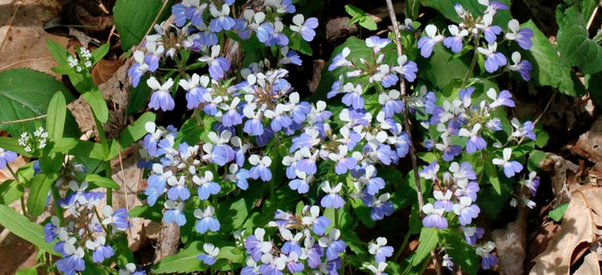 Dramatic, two-toned blue-eyed Mary