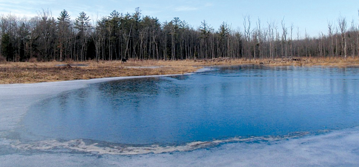 A winter's walk  //  A half-mile hike on a rustic trail through the Helen B. Katz Natural Area leads to a man-made pond.