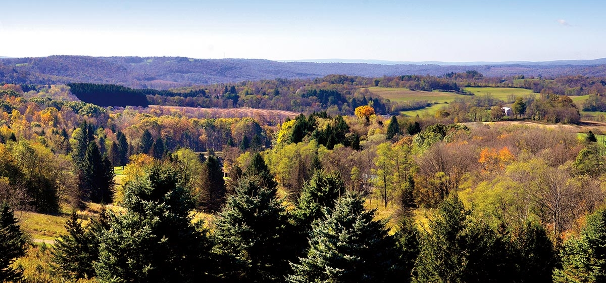 In addition to the sweeping views found at the overlook tower, Scenic View at Laurel Hill is also located within the Pennsylvania Audubon Society's Youghiogheny Valley/Ohiopyle State Park Important Bird Area.