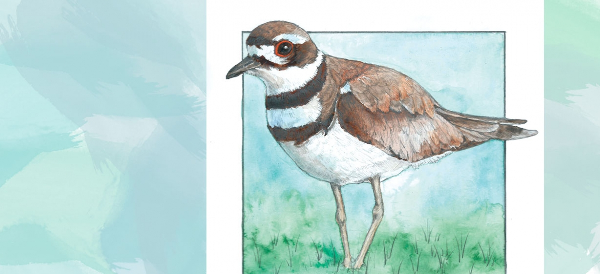 Season of the Killdeer