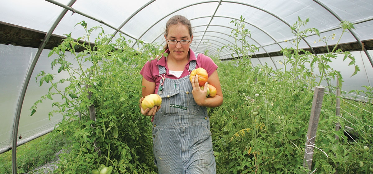 Jen Montgomery, one of the four new owners of Blackberry Meadows Farm, collects tomatoes from the greenhouse.