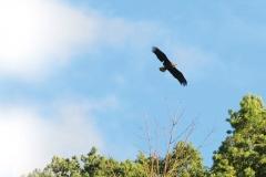 14_fall_eagles01