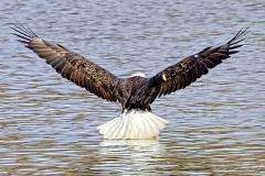 14_fall_eagles02