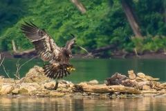 14_fall_eagles03