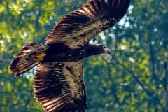 14_fall_eagles08