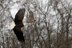 14_fall_eagles10