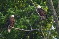 14_fall_eagles11