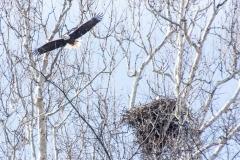 14_fall_eagles12