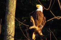 14_fall_eagles13