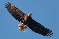 14_fall_eagles16