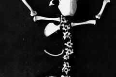 19_win_bones02