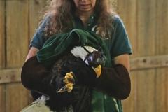 holmgren-eagle