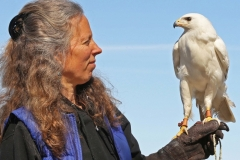 white-hawk-with-holmgren
