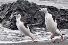 bti_17_03_28_hilliard_antarctica03