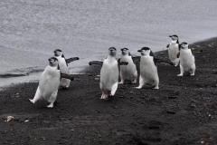 bti_17_03_28_hilliard_antarctica07