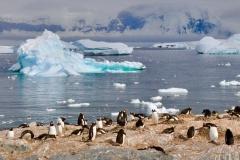 bti_17_03_28_hilliard_antarctica08