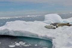 bti_17_03_28_hilliard_antarctica15