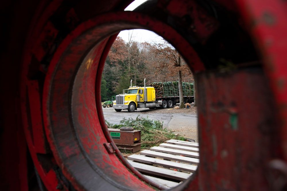 Indiana County Tree Farmers Keep the Green in Christmas ...