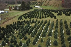 Beale_Trees_2018009